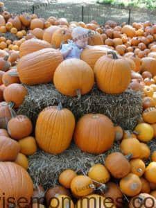 pumpkin patch_2